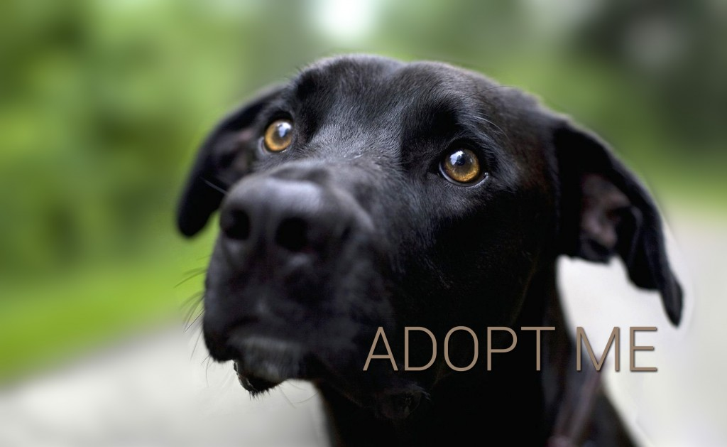 Woof adopt pets from rescue shelters
