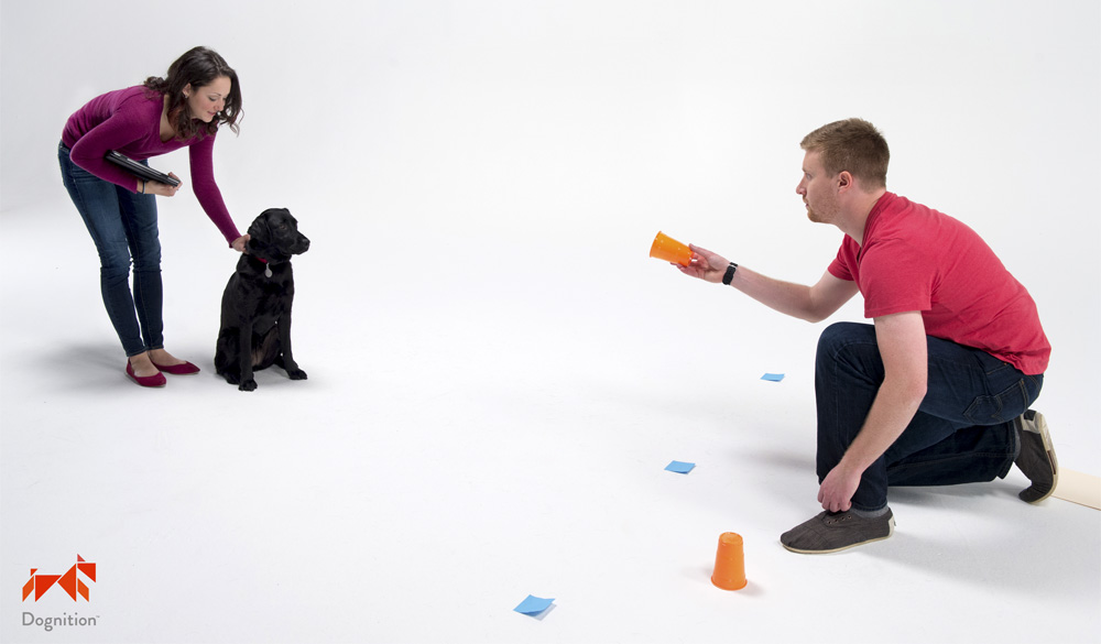 Dognition Lets You Find The Genius In Your Dog!